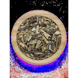 Echinacea bio